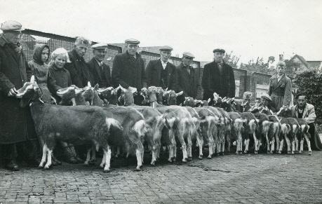 Afstammelingengroep Erfvorst 143 S in de herfst van 1951.