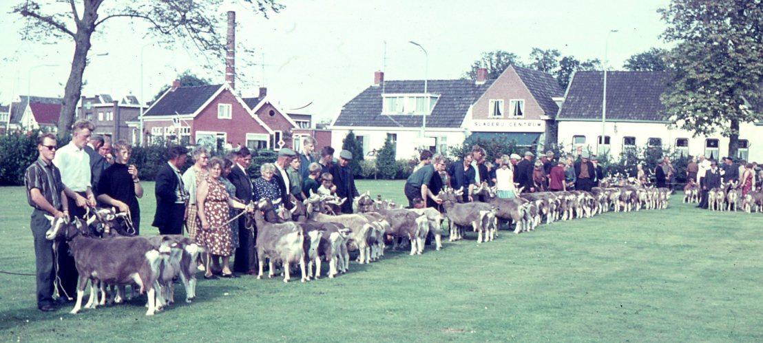 b004 Afstammelingengroepen Prov. Drenhte Eelde 1967 1A. T. Smtit, Zuidlaren, 1B Wed. Klaassens,Gieten, 1C. M.Meyering, Gieten 1D. H. Brink, Norg b.jpg-1
