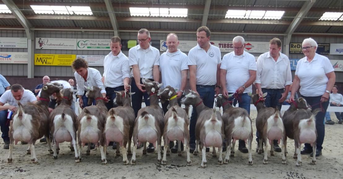 2017 Heeten. Kampioenschap Toggenburger geiten. Laatste tien, met links kampioen Sweelhoeve Eline 5.