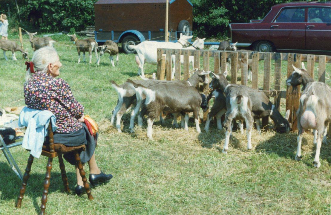 Prov.Drenthe 1978 vrouw Klaassens, bij haar geiten (88 jaar)