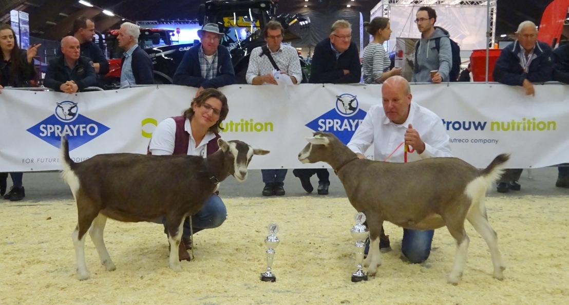 DSC03969.JPG kampioenen lammeren Emma en Renske's Madelieke JH