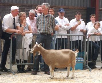 2011 Barneveld Landelijke geitenkeuring. Kampioen Toggenburger geiten Sarie 162 van D. de Jong.