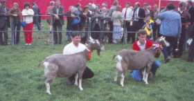 1982 Flevohof. Dronten. Nationale keuring. kampioenen. Kamp.: Johanna 16 en res. kamp.: Sarie 13