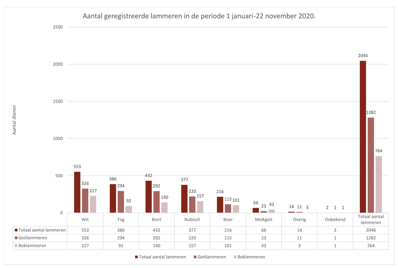 grafiek_aantal_lammeren_1_januari_-22_november_2020[1]